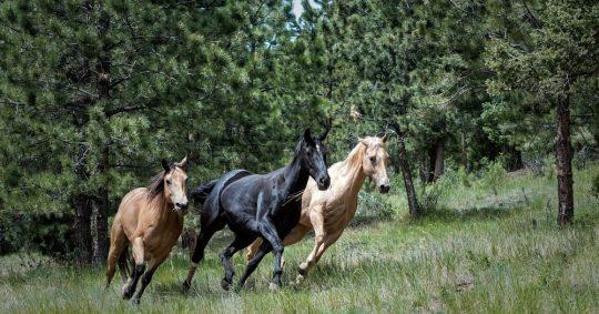 Upptäck Sverige från hästryggen